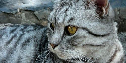к чему снятся кошки свои