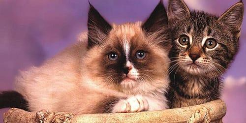 сонник кошки