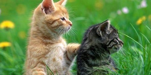 К чему снятся кошки - Кошки в вашем сне - Узнайте к