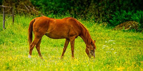 Видеть во сне лошадь на пастбище