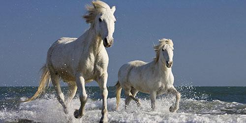 приснились белые лошади