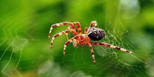 к чему снится паук на паутине