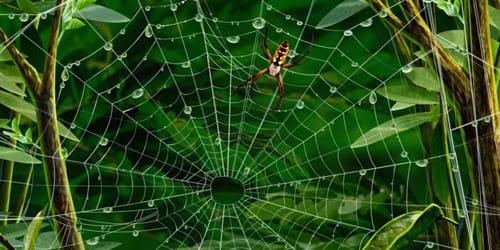 Сонник паук к чему снится паук во сне