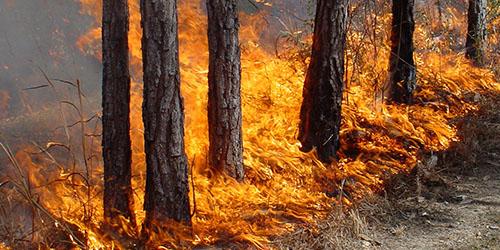 приснился пожар в лесу