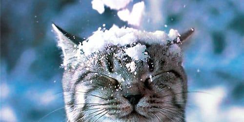 Сонник снег к чему снится снег во сне