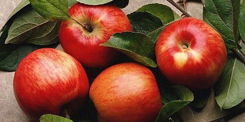 Во сне видеть яблоки в мешки фото
