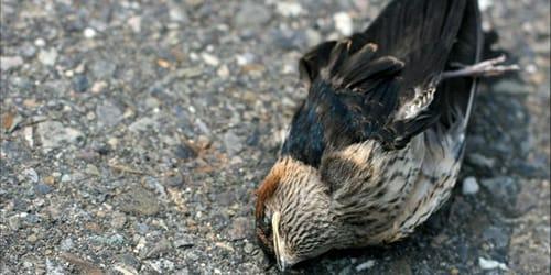 сонник мертвая птица