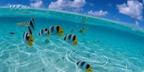 к чему снится океан или море