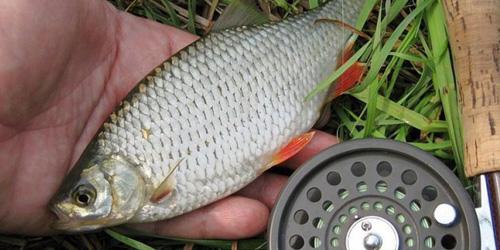 сонник ловить рыбу