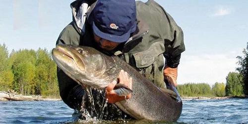 к чему снится ловить рыбу