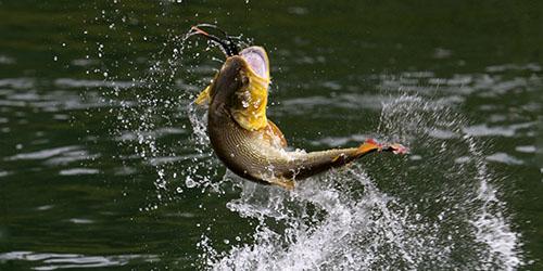 приснилось ловить рыбу на озере
