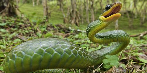 сонник укус змеи
