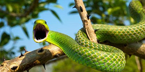 к чему снится укус змеи до крови
