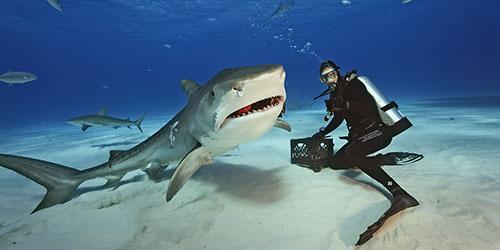 Кормить акулу