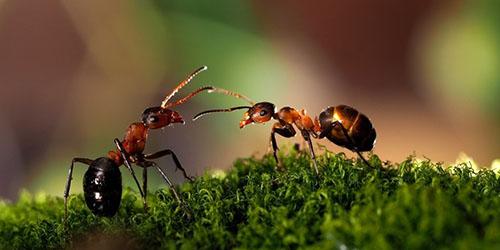 муравьи во сне
