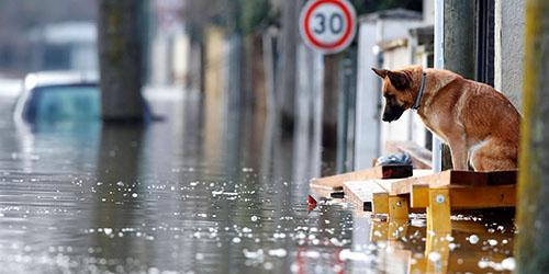 Видеть наводнение во сне