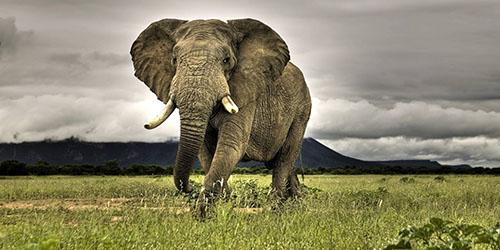 видеть во сне слона