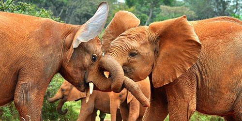 много слонов