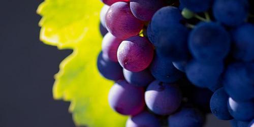 сонник виноград