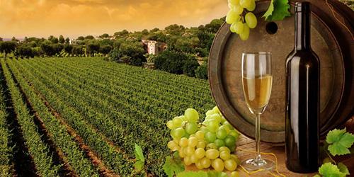 Сонник виноград к чему снится виноград во сне