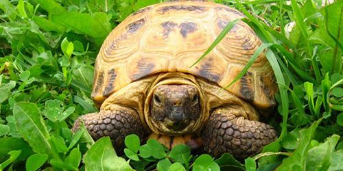 сонник черепаха