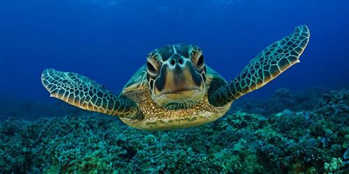 к чему снится черепаха