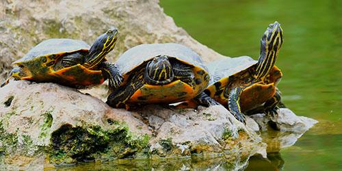 к чему снится много черепах