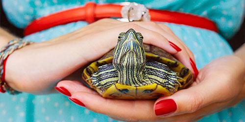 приснилось купить черепаху
