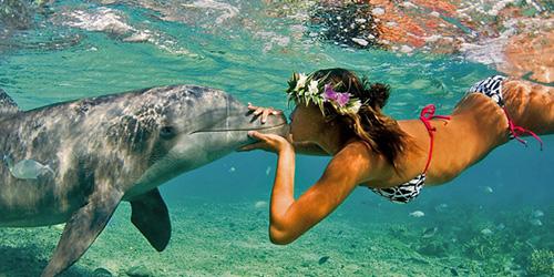 поцелуй с дельфином