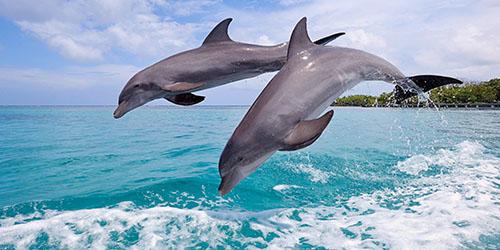 увидеть дельфинов во сне