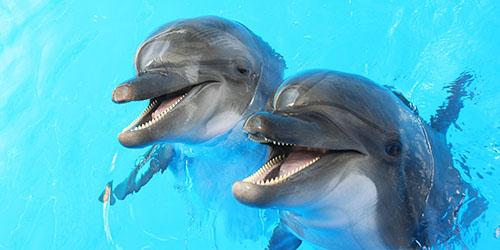к чему снятся дельфины в воде