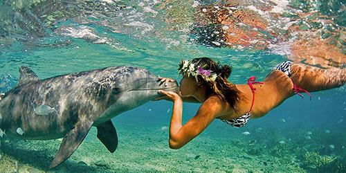 плавание с дельфинами