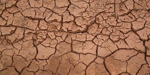 сонник грязь