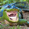 к чему снится агрессивный крокодил