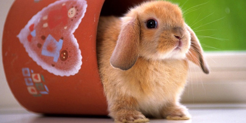 сонник кролик