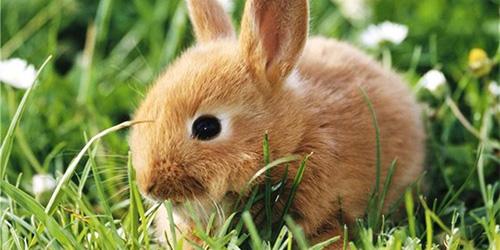 к чему снится кролик