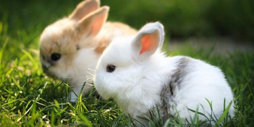 Сонник кролик к чему снится кролик во сне