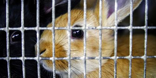 кролик в клетке