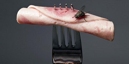 муха в еде