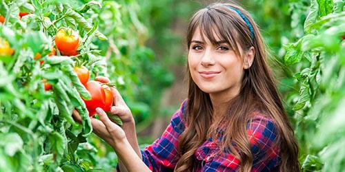 к чему снится выращивать помидоры