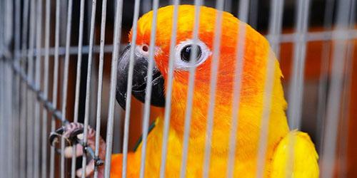 попугайчик в клетке
