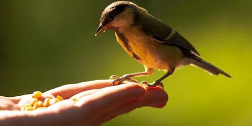 птица ест с рук