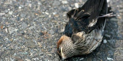 мертвая птица во сне