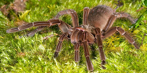 видеть большого паука во сне