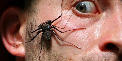 к чему снится нападение большого паука
