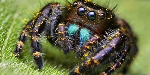 к чему снится большой паук