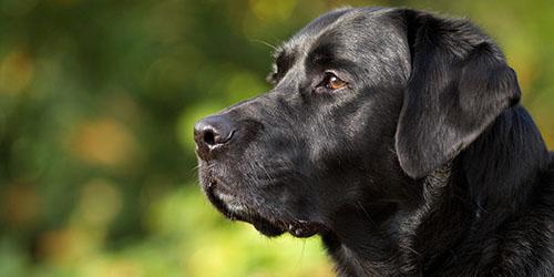 фото собак черных