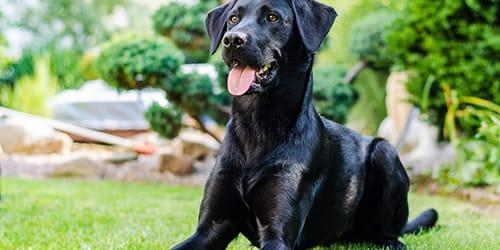 Сонник черная собака фото