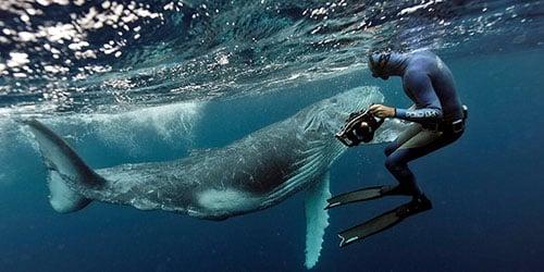 Плавать с китом