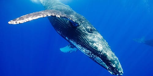 к чему снится кит